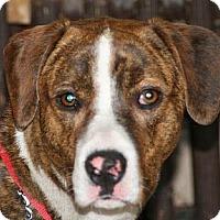 Adopt A Pet :: Boone - Jacksonville, FL