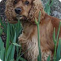 Adopt A Pet :: Diego - Sugarland, TX