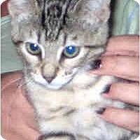 Adopt A Pet :: Chica - Jacksonville, FL