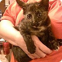 Adopt A Pet :: Seraphina - Cranford/Rartian, NJ