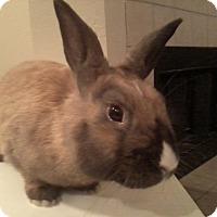 Adopt A Pet :: Button - Watauga, TX
