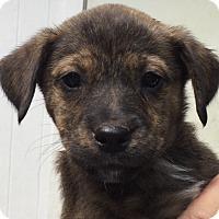 Adopt A Pet :: Willis#2M - Orlando, FL