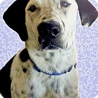 Adopt A Pet :: Moose family dog - Sacramento, CA