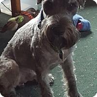 Adopt A Pet :: Zak (Ozaki) - Millersville, MD