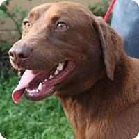 Adopt A Pet :: Lisa Marie - Deer Park, NY