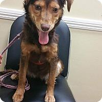 Adopt A Pet :: Bontia - LAKEWOOD, CA