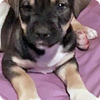 Adopt A Pet :: Ted in OK / pup - pending - Beacon, NY