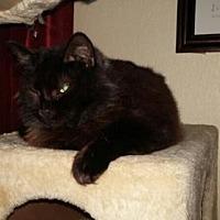 Adopt A Pet :: Miracle - Vacaville, CA
