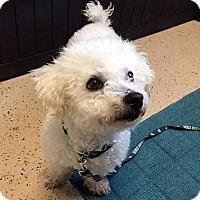 Adopt A Pet :: Oliver - Adoption Pending! - Farmington Hills, MI