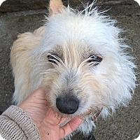 Adopt A Pet :: LUKA - Mahopac, NY