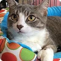 Adopt A Pet :: Maureen - Port Republic, MD