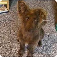 Adopt A Pet :: Khari - Bakersfield, CA