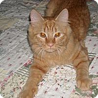 Adopt A Pet :: Trevor - Arlington, VA