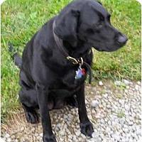 Adopt A Pet :: Morgan - Courtesy Post - Cincinnati, OH