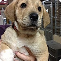 Adopt A Pet :: Toby - Hilliard, OH