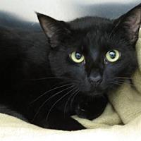 Adopt A Pet :: Poe (Gentle Boy!) - Santa Monica, CA