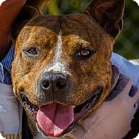 Adopt A Pet :: kane - Everett, WA