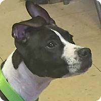 Adopt A Pet :: Riley - North Olmsted, OH