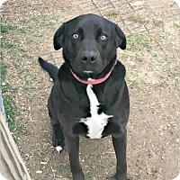 Adopt A Pet :: MAX GINN - Bedford, KY