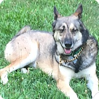 Adopt A Pet :: Granite AKA Gunner-Adopted! - Detroit, MI