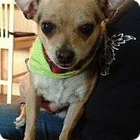 Adopt A Pet :: Chi Chi - Mary Esther, FL