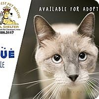 Adopt A Pet :: Blue - Davenport, IA