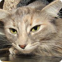 Adopt A Pet :: Cake - Sierra Vista, AZ