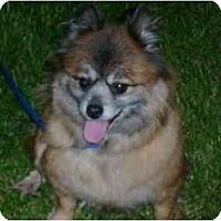 Adopt A Pet :: Roxie - Grove City, OH