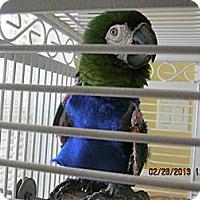 Adopt A Pet :: Merlin - Burleson, TX