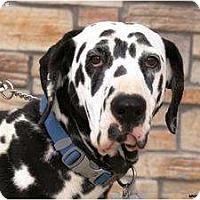 Adopt A Pet :: Haylee - Newcastle, OK