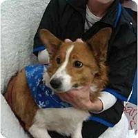 Adopt A Pet :: Missy - Murfreesboro, TN