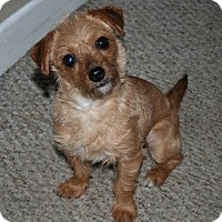 Adopt A Pet :: Sweet Pea - Hamilton, ON
