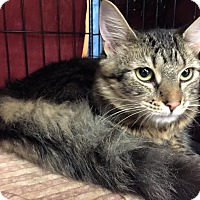 Adopt A Pet :: Lily - Frederick, MD