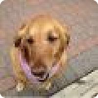 Adopt A Pet :: Missy - Denver, CO