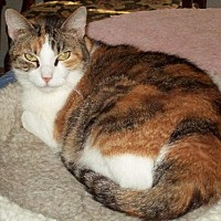 Adopt A Pet :: Carmina - Tomball, TX