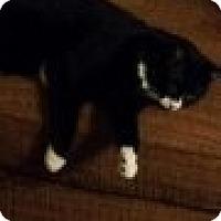 Adopt A Pet :: Butch Catsidy - Delmont, PA
