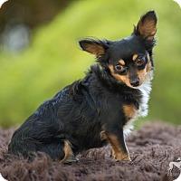 Adopt A Pet :: Reuben - Salem, OR