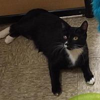 Adopt A Pet :: Juniper - Atlanta, GA