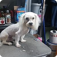 Adopt A Pet :: Sebastian - Santa Ana, CA