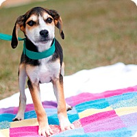 Adopt A Pet :: Lady - Tampa, FL