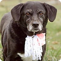 Adopt A Pet :: Annabelle - ADOPTED! - Zanesville, OH