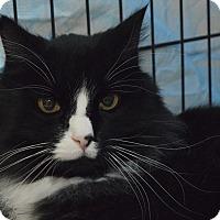Adopt A Pet :: Fonzie - Westfield, MA