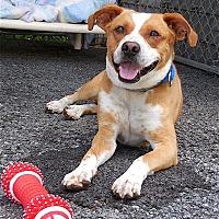 Adopt A Pet :: Slim - Carmel, NY