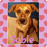 Adopt A Pet :: Sable - Laingsburg, MI