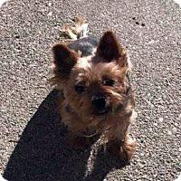 Adopt A Pet :: Pixie - Adoption Pending! - Farmington Hills, MI