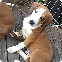 Adopt A Pet :: Skoot - Gilbertsville, PA