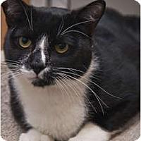 Adopt A Pet :: Wally - Beacon, NY