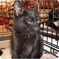 Adopt A Pet :: Sabbath - Riverside, RI