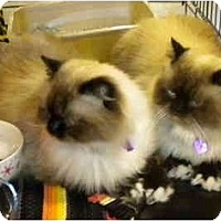 Adopt A Pet :: Sam - Jacksonville, FL