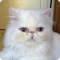 Adopt A Pet :: Crystal - Beverly Hills, CA